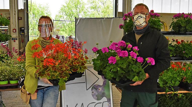 News - Pflanzenverkauf im bbw Südhessen